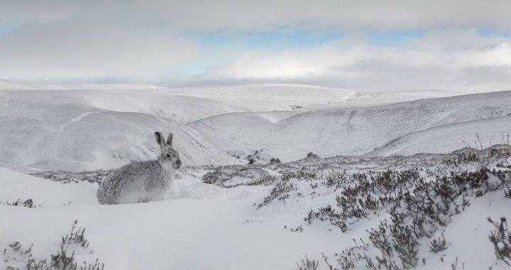 Зайко в снега
